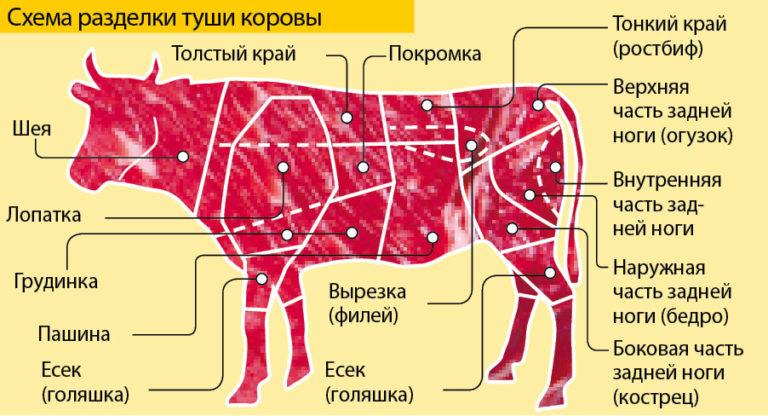 отбивная котлета из межреберной части говядины 8 букв